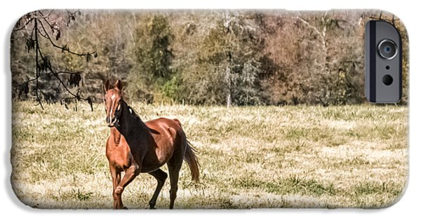American Saddlebred Art iPhone Cases - Chestnut Mare iPhone Case by CarolLMiller Photography