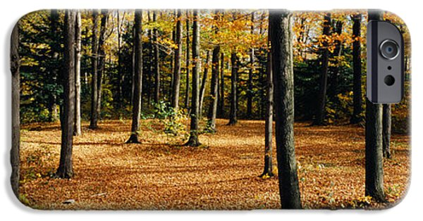 Forest Floor iPhone Cases - Chestnut Ridge Park Orchard Park Ny Usa iPhone Case by Panoramic Images