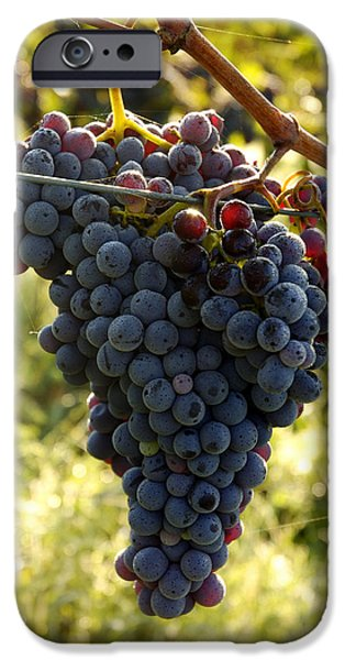 Morning Sun On Vines iPhone Cases - Chianti Grapes iPhone Case by Norman Pogson