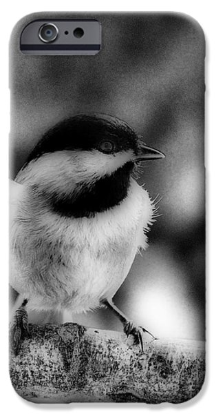 Birds iPhone Cases - Chicadee iPhone Case by Skip Willits