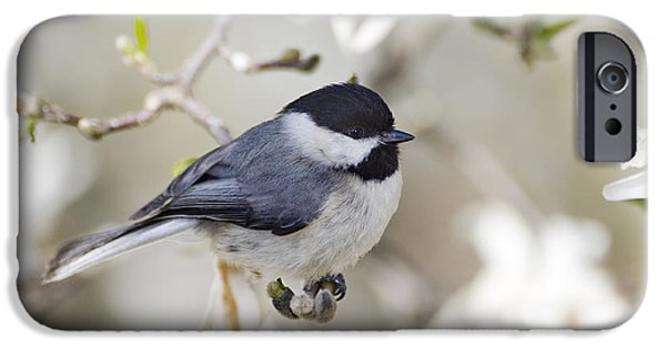 Southern Indiana iPhone Cases - Chickadee and Magnolia - D008970 iPhone Case by Daniel Dempster