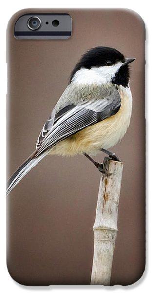 Chickadee iPhone Cases - Chickadee iPhone Case by Bill  Wakeley