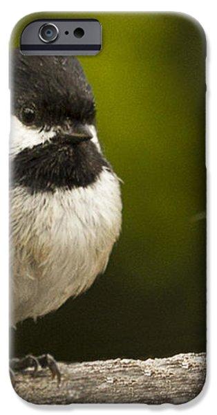 Chickadee dee dee iPhone Case by Jean Noren