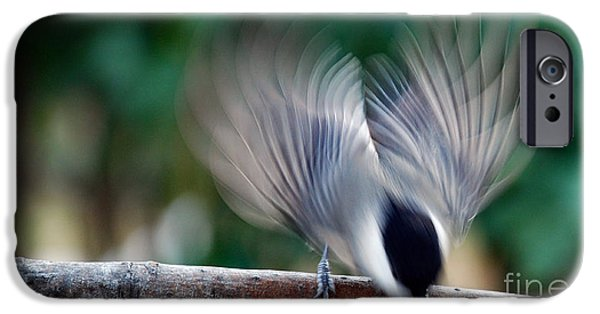 Birds iPhone Cases - Chickadee Fright iPhone Case by Skip Willits