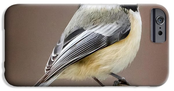Chickadee iPhone Cases - Chickadee Square iPhone Case by Bill  Wakeley