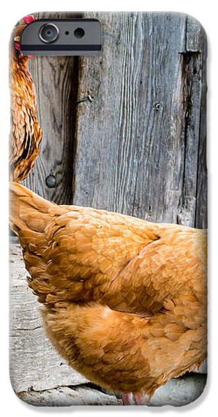 Chickens at the Barn iPhone Case by Edward Fielding