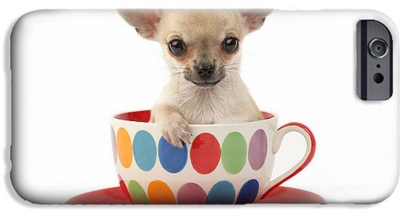 Greg Cuddiford Digital iPhone Cases - Chihuahua in Cup DP684 iPhone Case by Greg Cuddiford