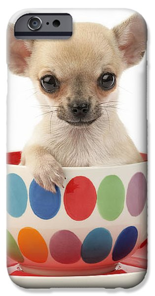 Chihuahua in Cup DP684 iPhone Case by Greg Cuddiford