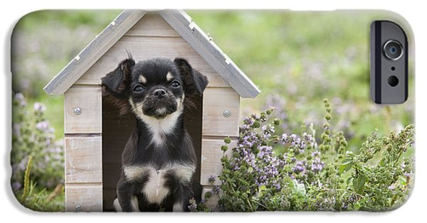 Doghouse iPhone Cases - Chihuahua Puppy Dog iPhone Case by Jean-Michel Labat