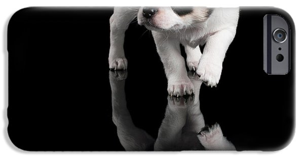 Black Dog iPhone Cases - Chihuahua puppy steps forward on black background iPhone Case by Konstantin Gushcha