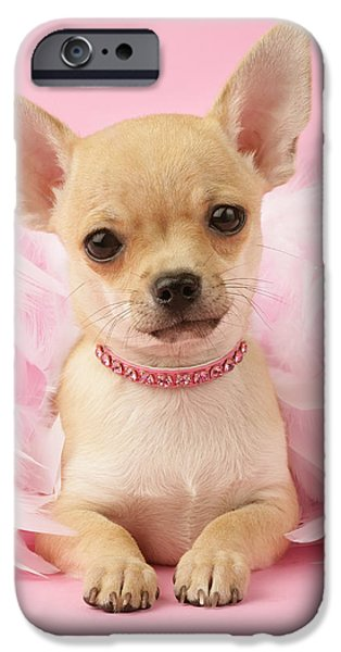 Puppies Photographs iPhone Cases - Chihuahua With Feather Boa iPhone Case by Greg Cuddiford