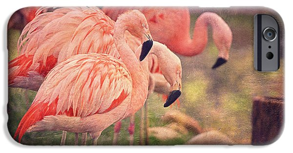 Exoticism iPhone Cases - Chilean Flamingos  iPhone Case by Maria Angelica Maira
