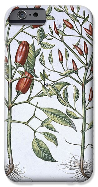Petals Drawings iPhone Cases - Chilli Pepper Plants iPhone Case by German School