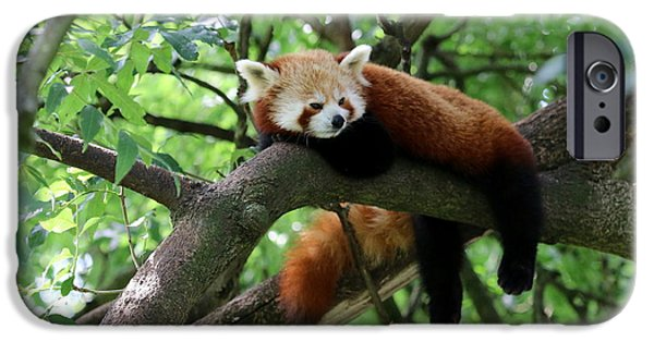 Smithsonian iPhone Cases - Chilling Red Panda iPhone Case by Christiane Schulze Art And Photography