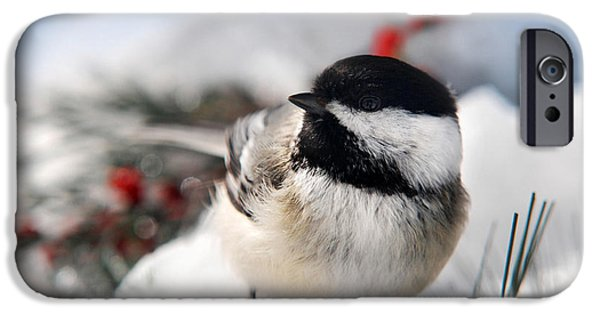 Recently Sold -  - Winter In Maine iPhone Cases - Chilly Chickadee iPhone Case by Christina Rollo