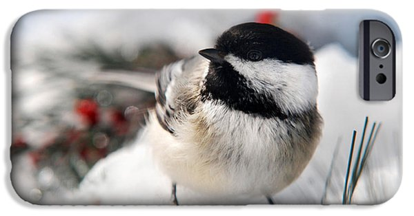 Winter In Maine iPhone Cases - Chilly Chickadee iPhone Case by Christina Rollo
