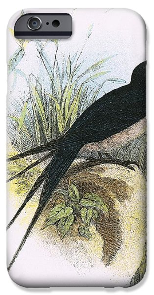 Swallows iPhone Cases - Chimney Swallow iPhone Case by English School