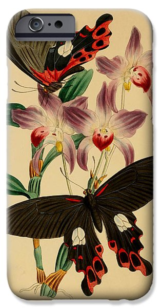 Business Drawings iPhone Cases - Chinese Butterflies iPhone Case by Philip Ralley