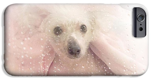 Dogs iPhone Cases - Chinese Crested Hairless iPhone Case by Maria Dryfhout
