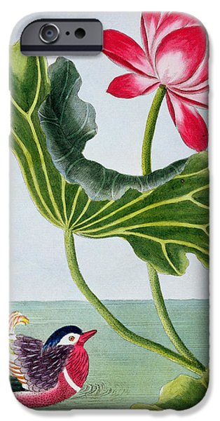 Still Life iPhone Cases - Chinese Red Water Lily iPhone Case by Pierre Joseph Buchoz