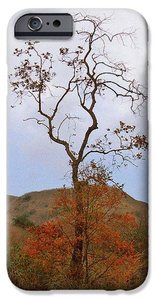 Chino Hills Tree iPhone Case by Ben and Raisa Gertsberg