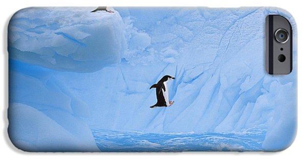 Ledge iPhone Cases - Chinstrap Penguins Jump Into Ocean From iPhone Case by Johnny Johnson