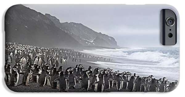 Bailey Island iPhone Cases - Chinstrap Penguins Marching To The Sea iPhone Case by Panoramic Images