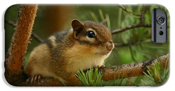 Chipmunk iPhone Cases - Chip iPhone Case by Shane Holsclaw