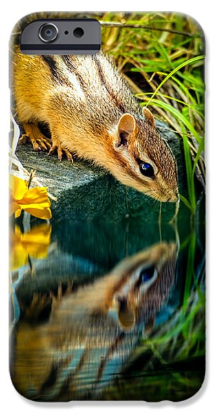 Framed iPhone Cases - Chipmunk Reflection iPhone Case by Bob Orsillo