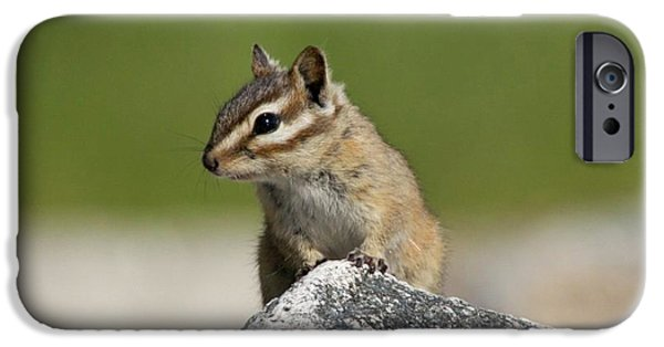 Chipmunk iPhone Cases - Chipmunk Rock iPhone Case by Tania Morris