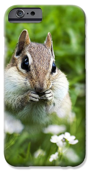 Character Portraits Photographs iPhone Cases - Chipmunk Subtle Strategist  iPhone Case by Christina Rollo