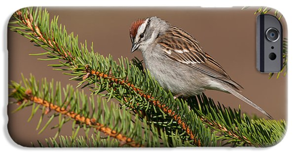 Pines iPhone Cases - Chipper Chipper iPhone Case by Willie McHale