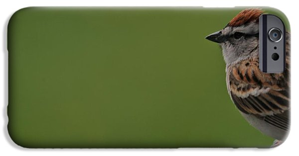 Sparrow iPhone Cases - Chirping Sparrow On Green iPhone Case by Dan Sproul