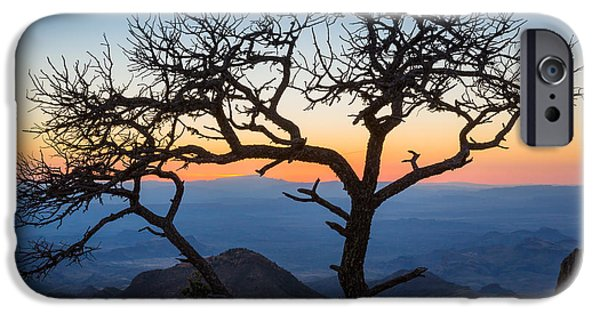 South Rim iPhone Cases - Chisos Tree iPhone Case by Inge Johnsson