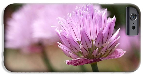 Alliums iPhone Cases - Chives iPhone Case by Rona Black