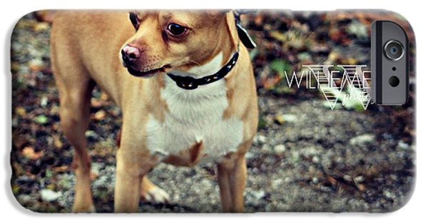 Chiwawa iPhone Cases - Chiwawa Pitbull Mix iPhone Case by Wilhemenia Williams