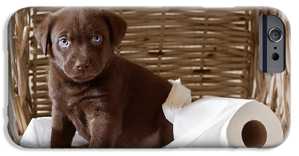 Chocolate Lab iPhone Cases - Chocolate Lab - Animal Rescue Portraits iPhone Case by Andrea Borden