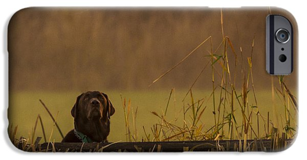 Chocolate Labrador Retriever iPhone Cases - Chocolate Lab Hunting Ducks iPhone Case by Jean Noren