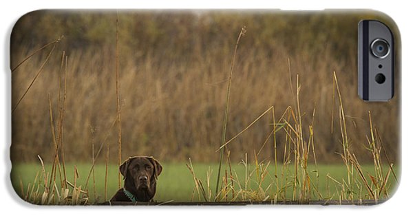 Chocolate Lab iPhone Cases - Chocolate Lab in the Field iPhone Case by Jean Noren