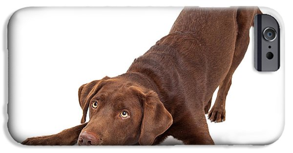 Working Dogs iPhone Cases - Chocolate Labrador Dog Bowing and Looking Up iPhone Case by Susan  Schmitz