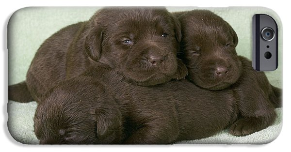 Chocolate Lab iPhone Cases - Chocolate Labrador Puppies iPhone Case by Jean-Michel Labat