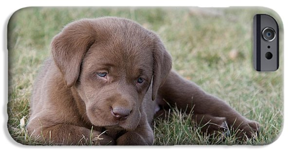 Chocolate Lab iPhone Cases - Chocolate Labrador Puppy iPhone Case by Linda Freshwaters Arndt