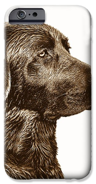 Chocolate Lab iPhone Cases - Chocolate Labrador Retriever iPhone Case by Jennie Marie Schell