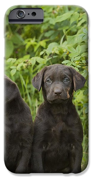 Chocolate Labrador Retriever Puppies iPhone Case by Linda Freshwaters Arndt