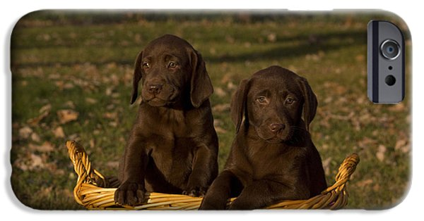 Chocolate Lab iPhone Cases - Chocolate Labrador Retriever Pups iPhone Case by Linda Freshwaters Arndt
