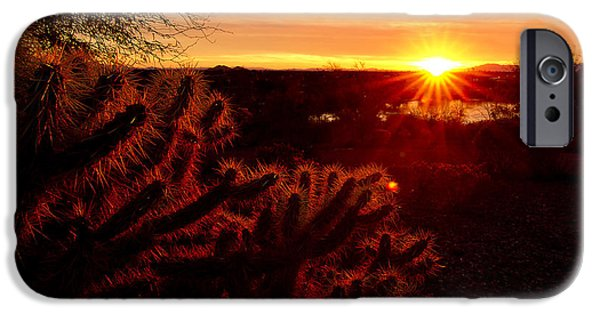 Big Blue Marble iPhone Cases - Cholla on Fire iPhone Case by Kelly Gibson