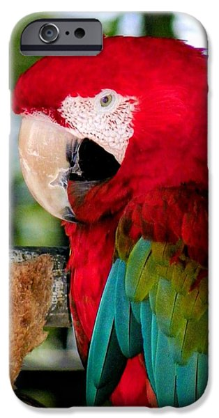 Feeding Birds iPhone Cases - Chowtime iPhone Case by Karen Wiles