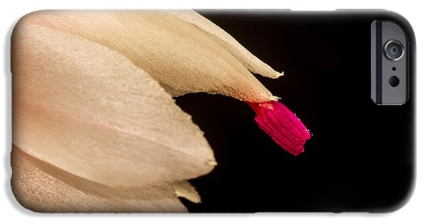 Interior Glass iPhone Cases - Christmas Cactus Flower iPhone Case by Mitch Shindelbower