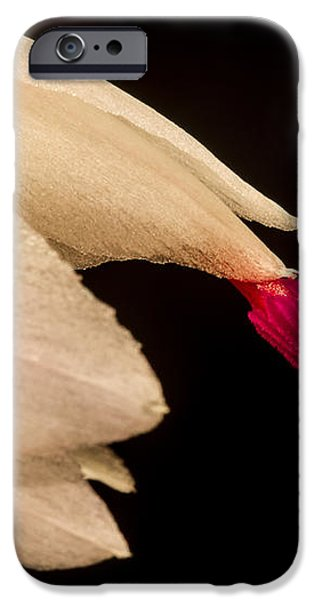 Christmas Cactus Flower iPhone Case by Mitch Shindelbower