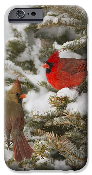 Best Sellers -  - Winter Storm iPhone Cases - Christmas card with cardinals iPhone Case by Mircea Costina Photography